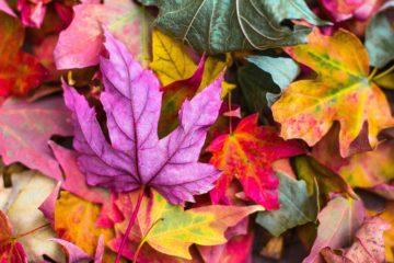 秋が深まってきましたね。急すぎるけど(笑)の画像