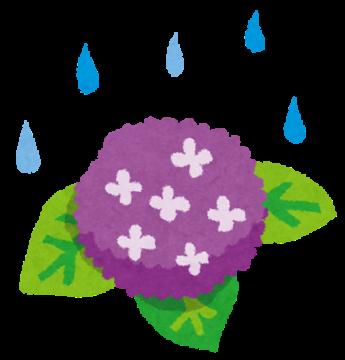 梅雨入り毎日、全力投球しています!の画像